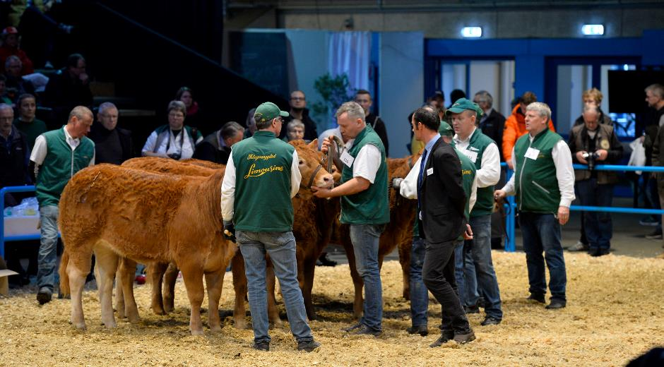 Guests from 18 countries have booked prior attendance in order to study the exhibits at the cattle show in Agromek's Hall Q. Photo: Wiegaarden.